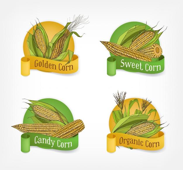 Verzameling etiketten, insignes of logo's met realistische hand getekende kolven van biologische maïs of maïskolven en linten geïsoleerd op een witte achtergrond. illustratie voor de promotie van landbouwproducten.