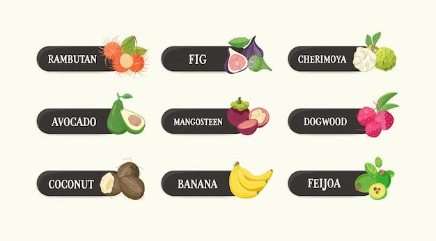 Verzameling etiketten met heerlijke rijpe verse, sappige exotische tropische vruchten en hun namen. bundel van tags met smakelijke rauwe veganistisch eten geïsoleerd