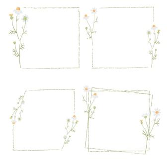 Verzameling frame met witte kamillebloem