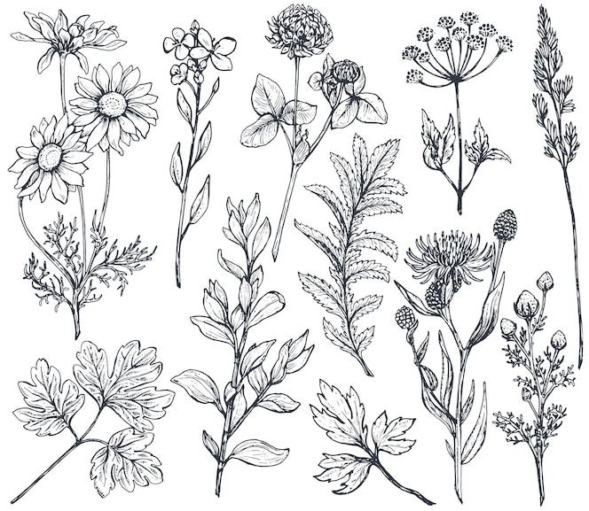 Verzameling hand getrokken bloemen en kruiden isoleren op witte achtergrond