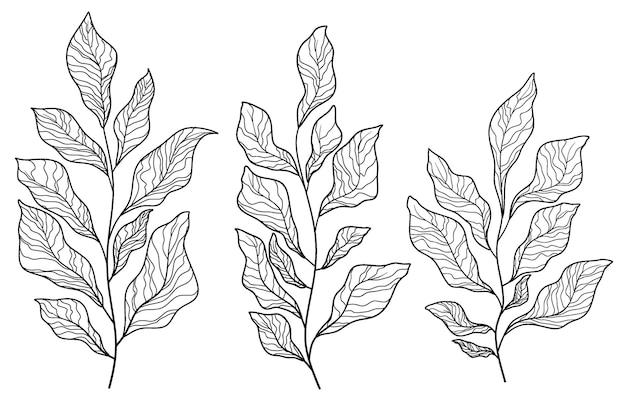 Verzameling handgetekende bladeren.
