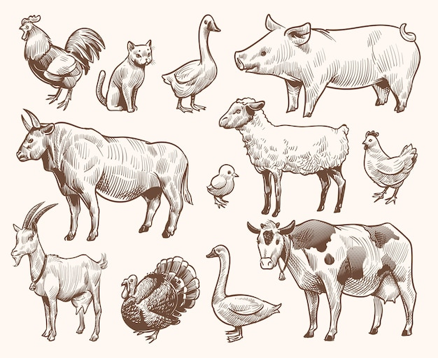 Verzameling sketch boerderijdieren