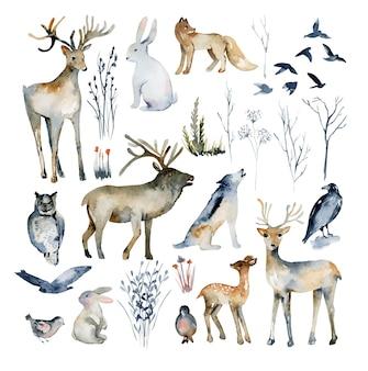 Verzameling van aquarel bosdieren (wolf, uil, vos, konijn, hert, haas, vogels, eland) en winterdroge bosplanten