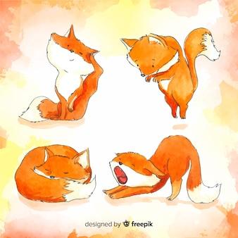 Verzameling van aquarel wilde vossen