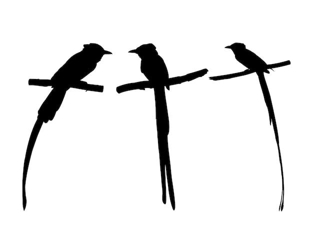 Verzameling van aziatische paradijs vliegenvanger vogel op boomtak silhouetten.