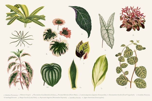 Verzameling van bladeren