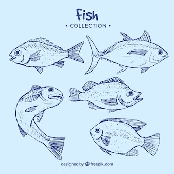 Verzameling van blauwe vis