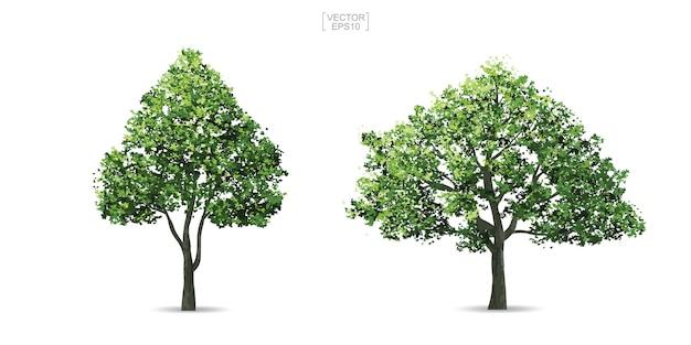 Verzameling van boom.