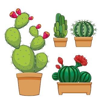 Verzameling van cactus in bloempot