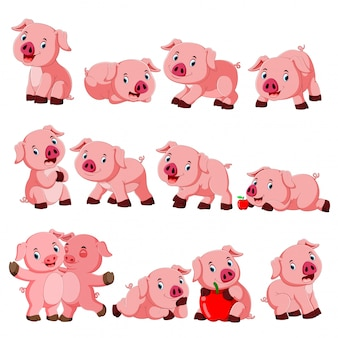 Verzameling van cute varken met verschillende poseren