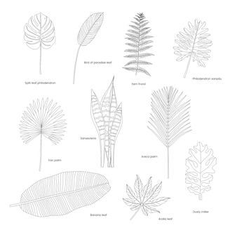 Verzameling van geïllustreerde tropische bladeren