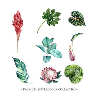 Verzameling van geïsoleerde aquarel gebladerte en bloemen
