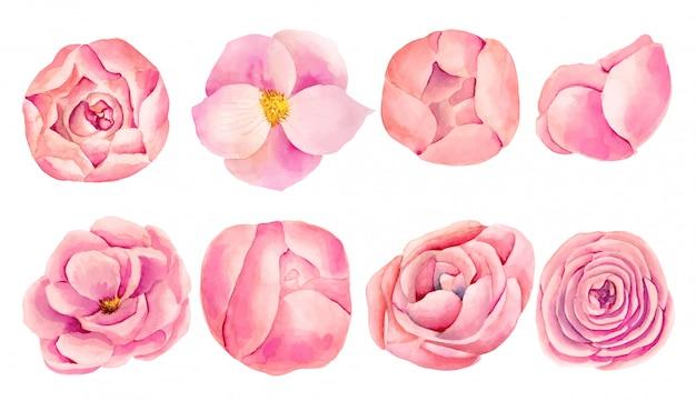 Verzameling van geïsoleerde aquarel roze rozen en pioenrozen, met de hand geschilderd op een witte achtergrond