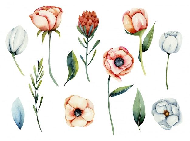 Verzameling van geïsoleerde aquarel wit en koraal anemoon en protea bloemen, handgeschilderde illustratie