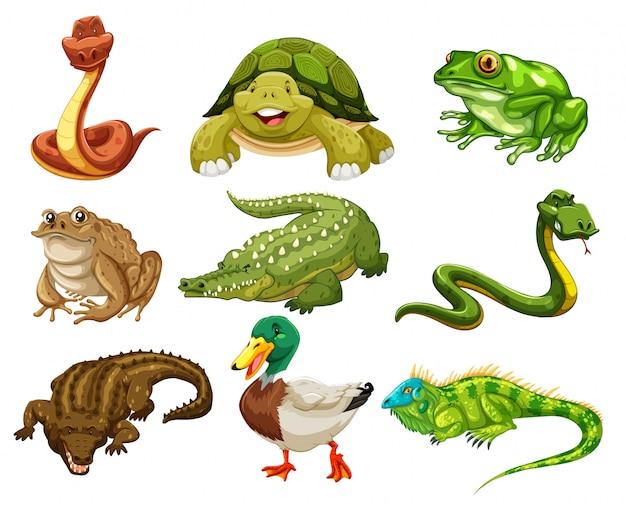Verzameling van geïsoleerde dieren