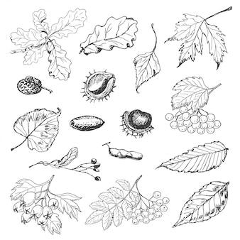 Verzameling van geïsoleerde herfstbladeren, zaden