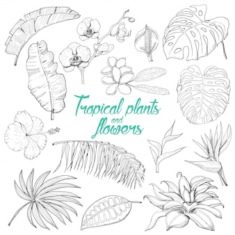 Verzameling van geïsoleerde tropische planten en bloemen