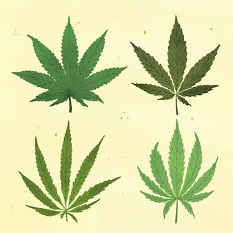 Verzameling van getekende botanische cannabisbladeren