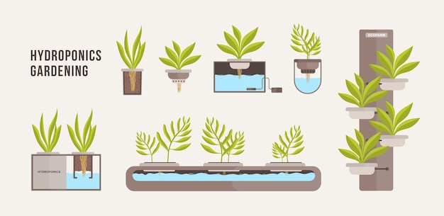 Verzameling van groene planten die groeien in potten met minerale voedingsoplossing.