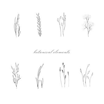 Verzameling van hand getrokken bloemenelementen