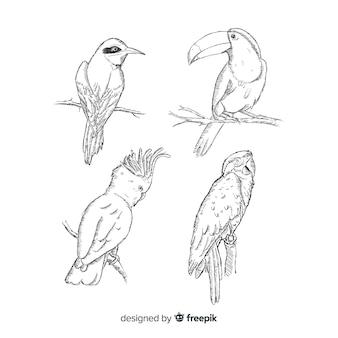 Verzameling van hand getrokken exotische vogel