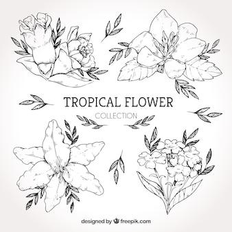 Verzameling van hand getrokken tropische bloemen
