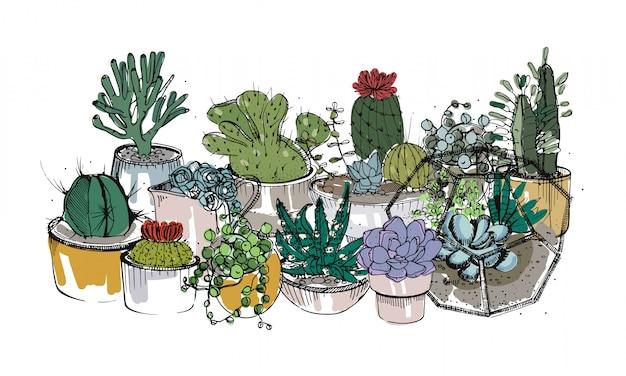 Verzameling van handgetekende vetplanten, cactussen en andere woestijnplanten die groeien in potten en glazen vivaria.