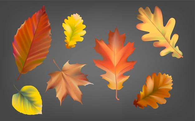 Verzameling van herfst bladeren vector