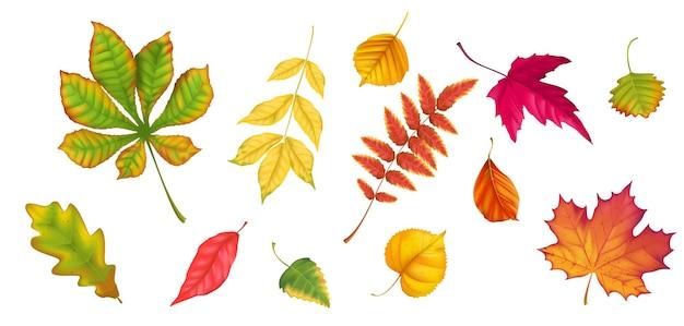 Verzameling van herfstbladeren van verschillende bomen realistische vectorstijl