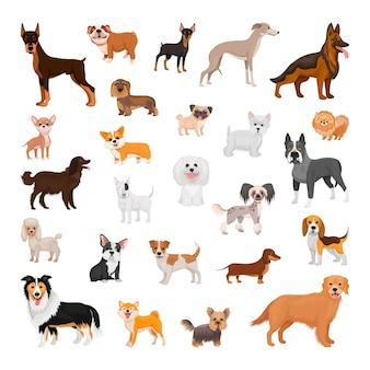 Verzameling van honden van verschillende rassen
