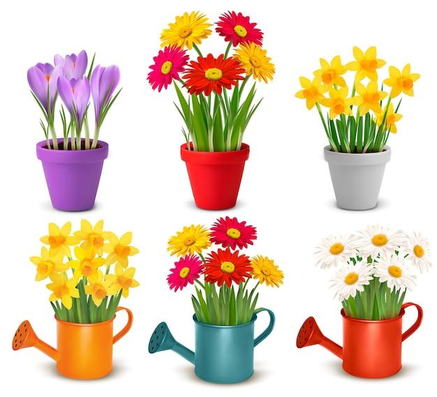 Verzameling van lente en zomer kleurrijke bloemen in potten en gieter.
