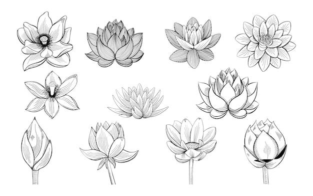 Verzameling van lotus schetsen.