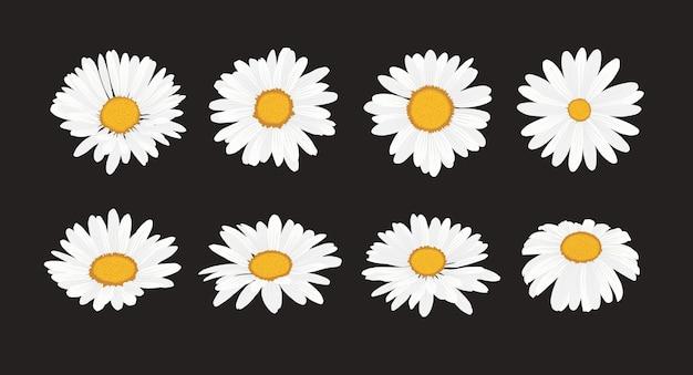 Verzameling van madeliefjebloem met platte ontwerpstijl