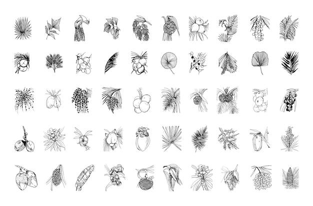 Verzameling van monochrome illustraties van palmbomen in schetsstijl