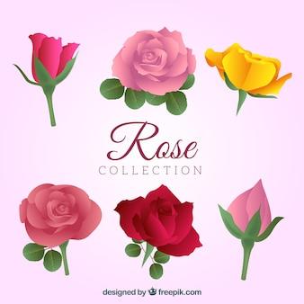 Verzameling van mooie rozen