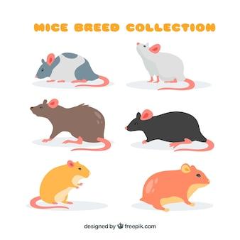 Verzameling van muizen rassen