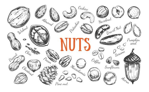 Verzameling van noten en zaden op wit wordt geïsoleerd