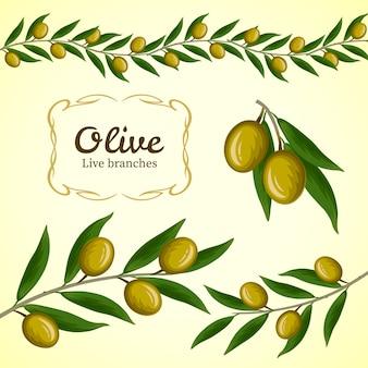Verzameling van olijftak, groene olijven logo