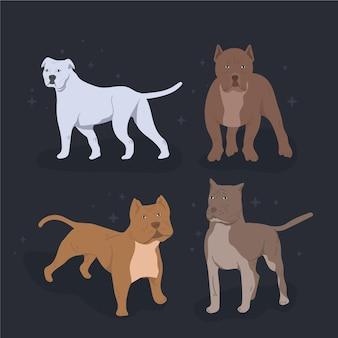 Verzameling van platte pitbull-puppy's