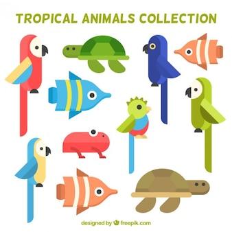 Verzameling van platte vogels en tropische dieren