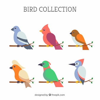 Verzameling van platte vogels