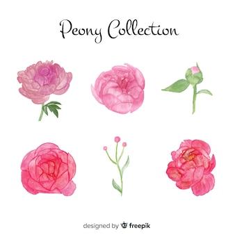 Verzameling van prachtige bloemen van de pioenroos