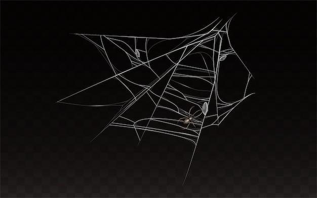 Verzameling van realistische spinnenweb met spin op.