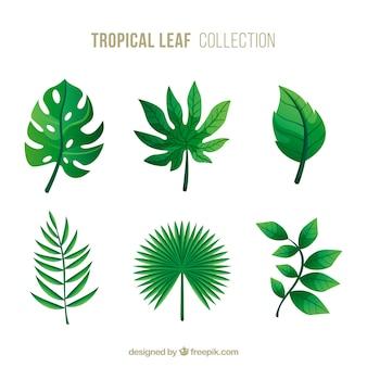 Verzameling van tropische bladeren