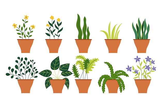 Verzameling van verschillende decoratie huis binnentuin potplanten