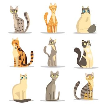 Verzameling van verschillende kattenrassen, schattige huisdieren illustraties