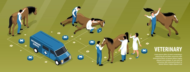 Veterinair stroomschema voor paarden