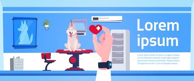 Veterinaire arts hand holding pill over het bureau binnenlandse concept van de dierenartskliniek