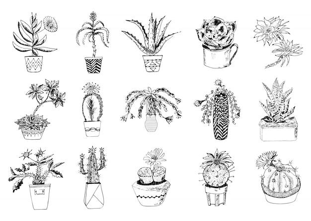 Vetplanten set, cactus, peyote, echeveria, haworthia, aloë vera. groene decoratieve planten in het theekopje en potten. bloemen botanische bladeren gegraveerd. hand getekend. collectie struiken en takken.