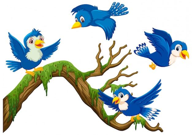 Vier blauwe vogels vliegen rond de tak